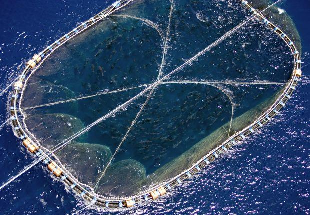 pesca-intensiva-mediterraneo