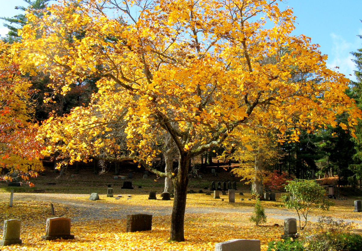 cimiteri new york woodlawn