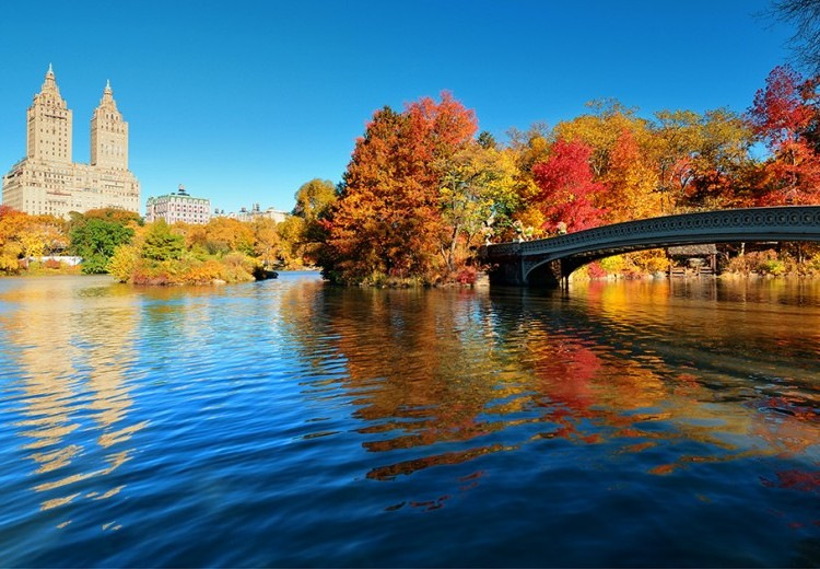 fall foliage new york autunno