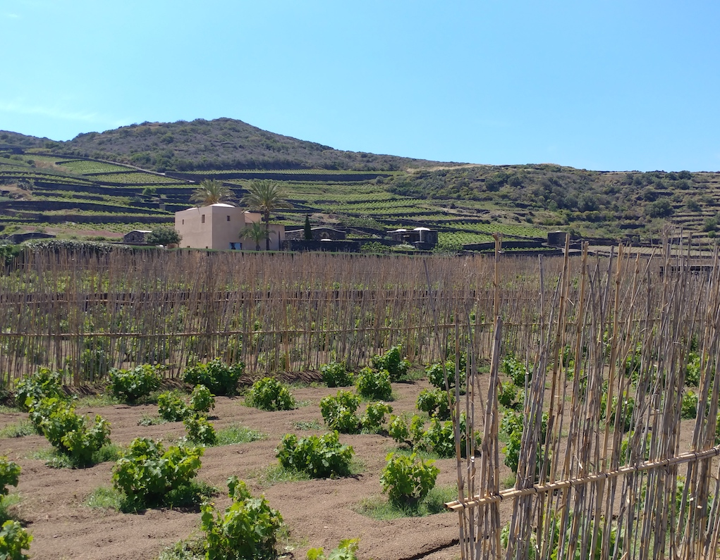 Donnafugata's Khamma Winery on Pantelleria.
