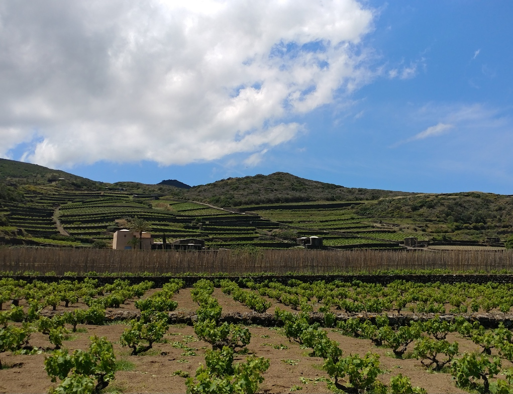 The View of Donnafugata's Khamma Winery Surrounded by Zibibbo Vineyards.