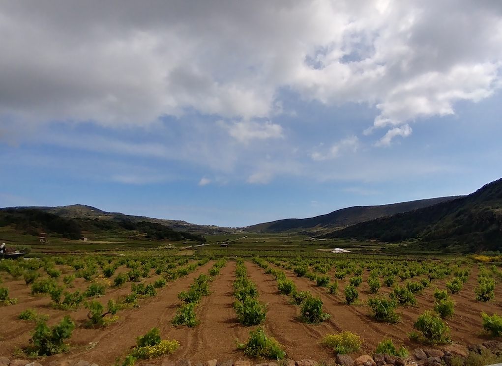 Wide View of the Coste Ghirlanda Vineyards After a Storm.