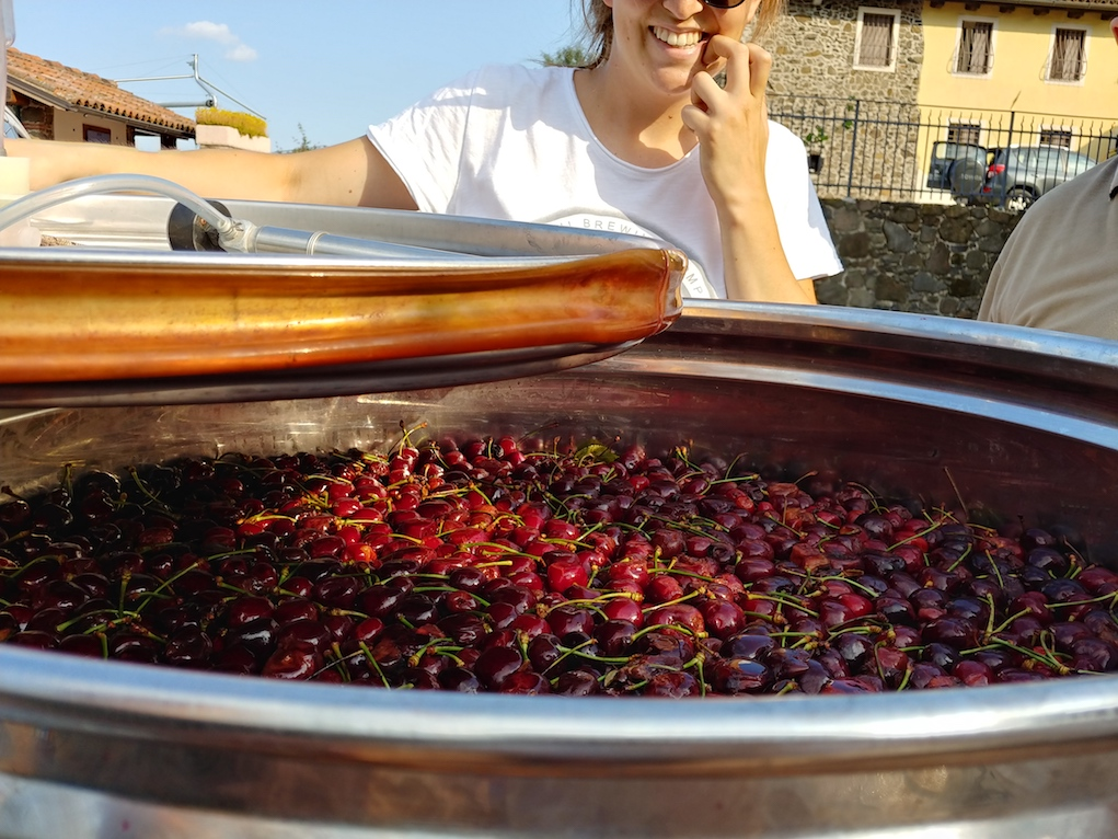 Masieri Family Showing the Cherries for Their Cherry Eau de Vie.