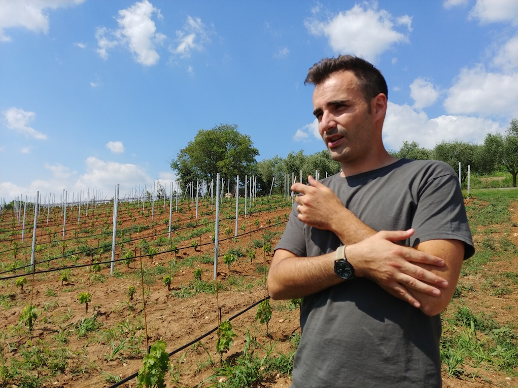 Sauro Maule in His Vineyards.