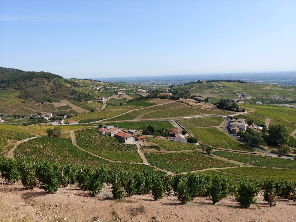 The Vineyards of Fleurie Cru in Beaujolais