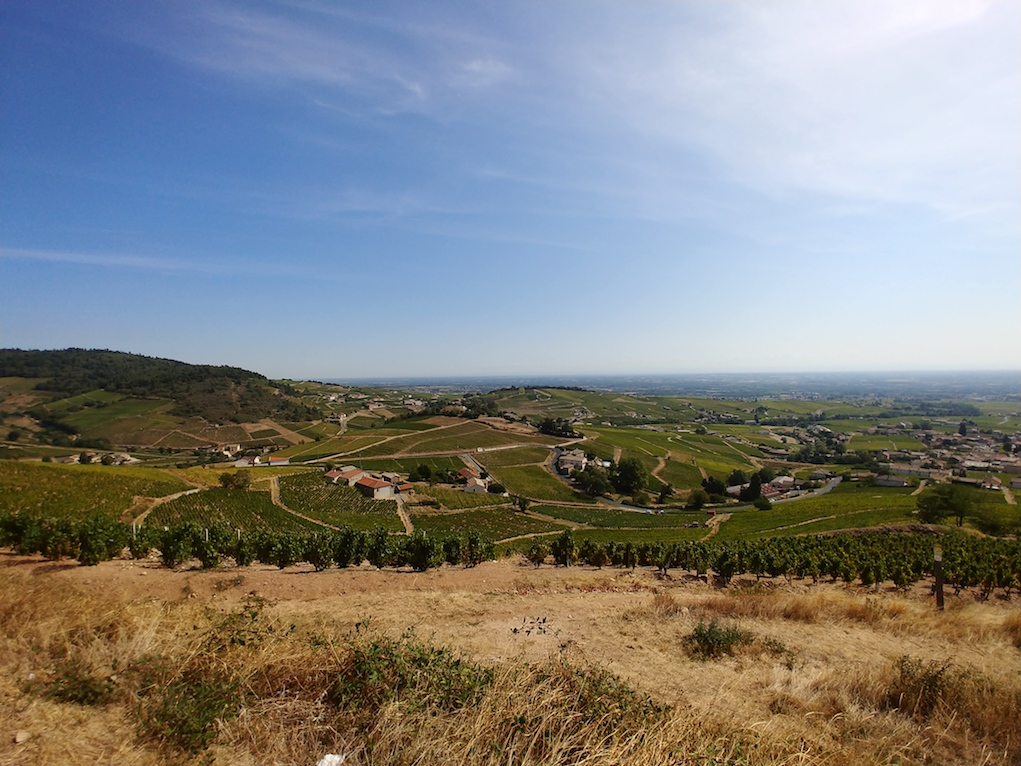 Vineyards of Fleurie Cru in Beaujolais