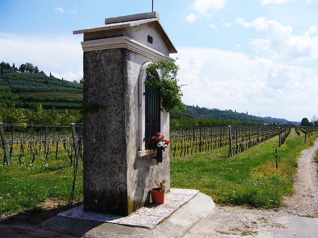 Ilatium Vineyards Photo Credit Ilatium