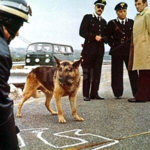 L'immagine di una scena del film
