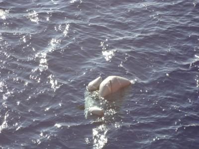 I resti del gommone affondato venerdì e che ha provocato la morte di 31 migranti