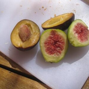 Fichi e prugne raccolti dagli alberi dell'autrice / Figs and a plum from the author's trees