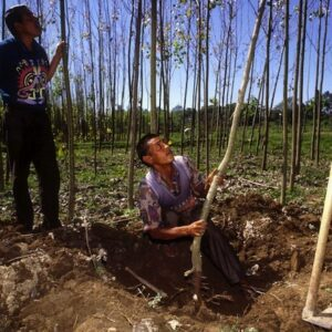 In many rural economies, the forest enterprises of families and communities are major contributors to local livelihoods. Photo: FAO/Giuseppe Bizzarri